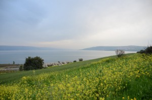 Frühling in Galiläa-2
