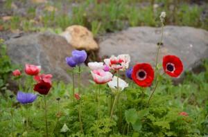 Frühling in Galiläa